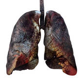 healthy_lung_2