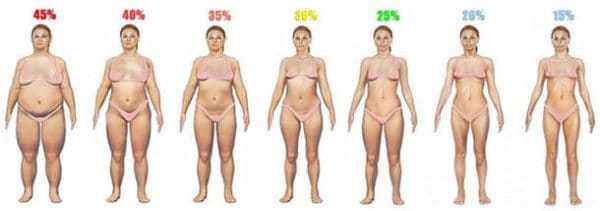 body fat percentage women