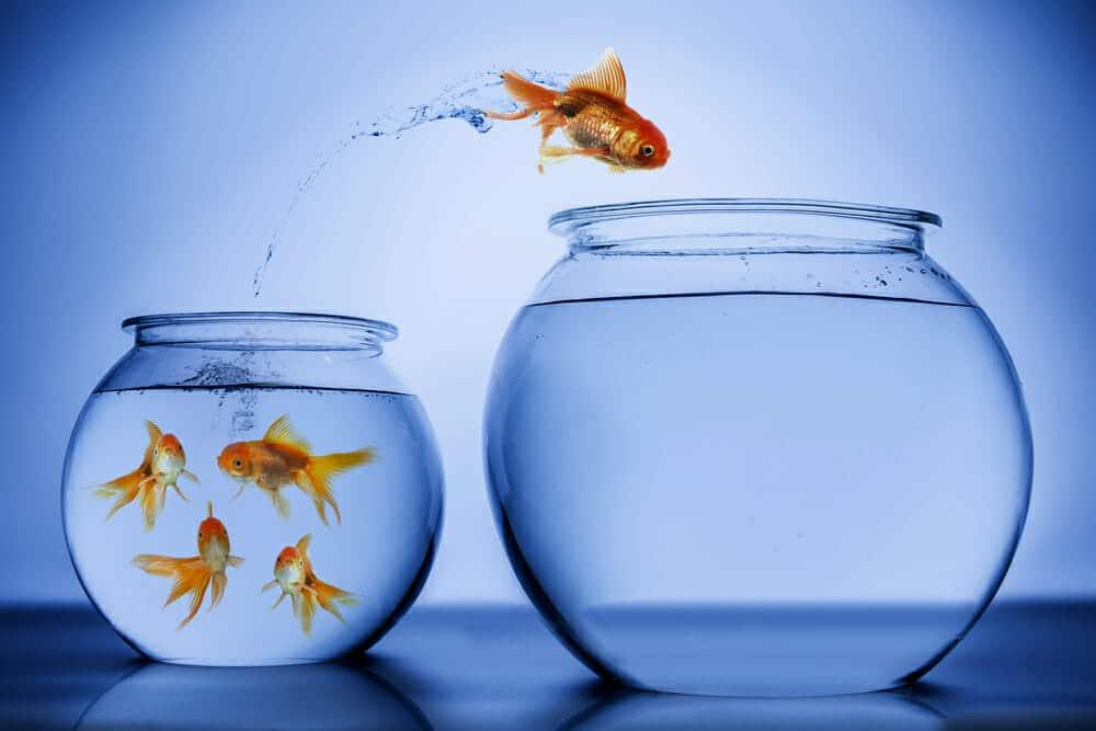 fish-change
